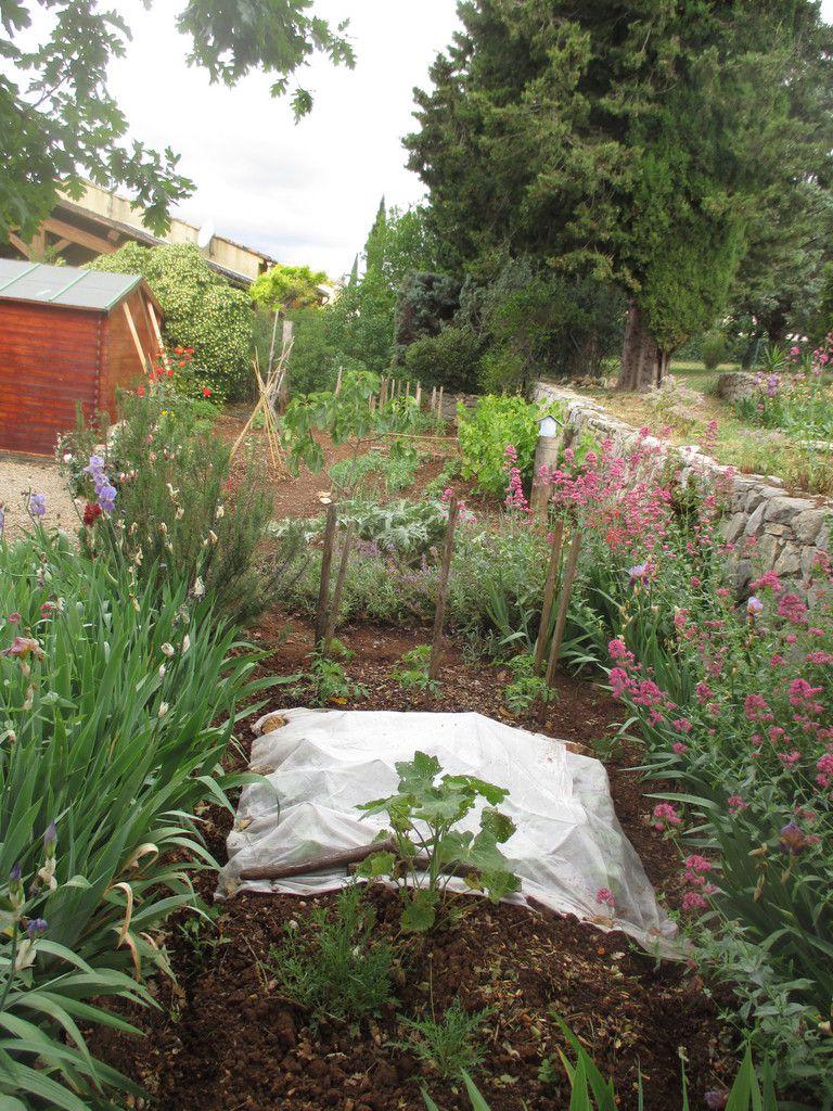 Ce serait logique que chaque colibri ait son potager. Envoyez les photos de vos semis, petits parcs, buttes, essais de permaculture, ... et partagez vos astuces de jardinier.