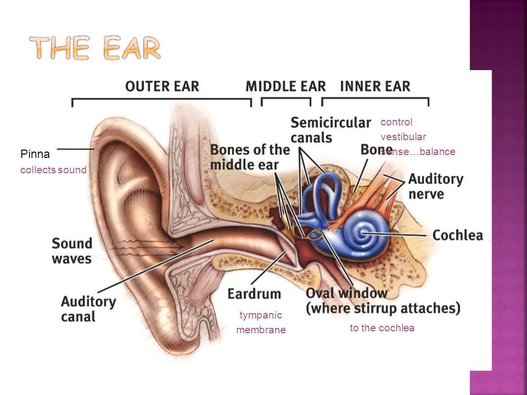 What If Child is Born Hearing Impaired ... - Health and fitness
