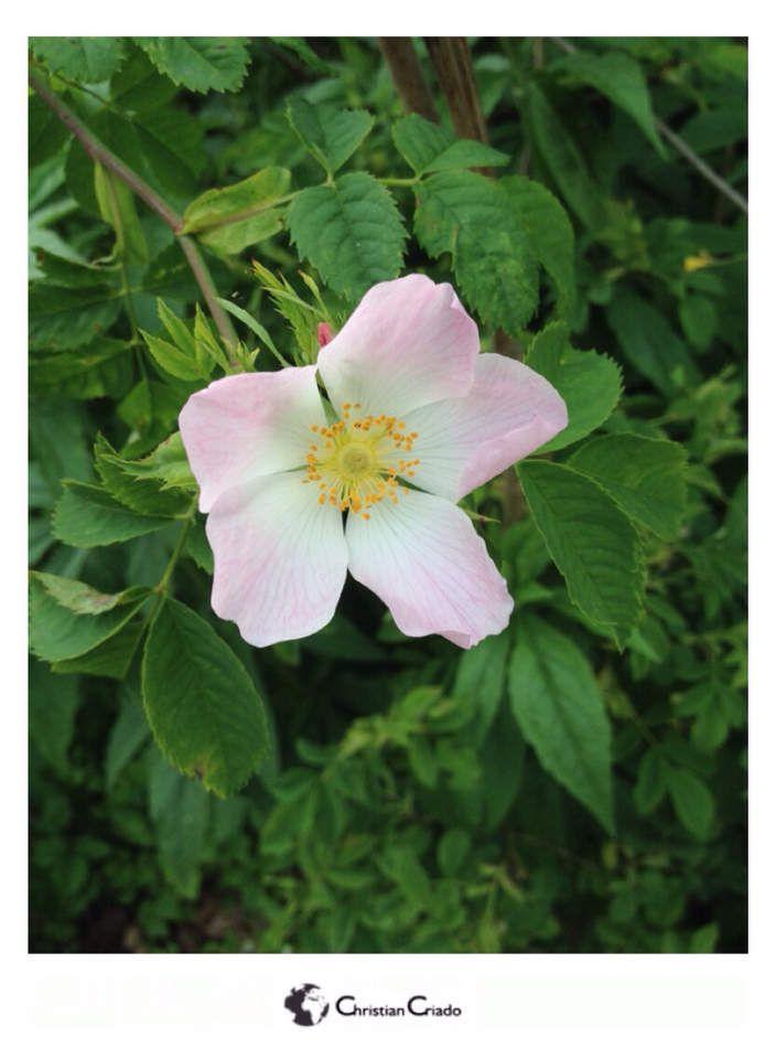 Photographie - Les Fleurs