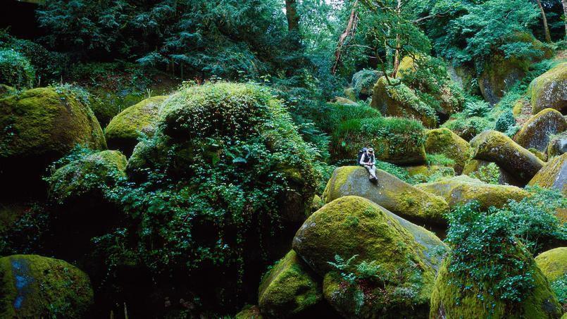 Un des nombreux «visages artistiques» de la France: un bois aux allures de «vallée aux fées». Crédits photo : THOMAS GOISQUE