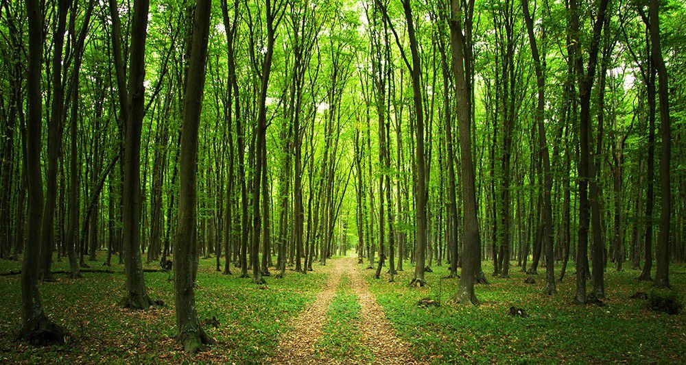 forets - Photo