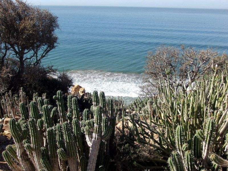 LA VEGETATION A TAGHAZOUT