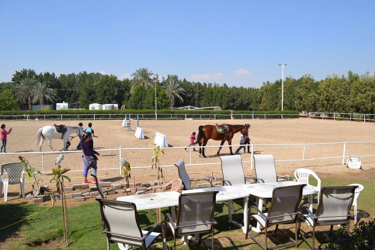 Bertrand Lecompte Your Coach Manager Of The Equestrian