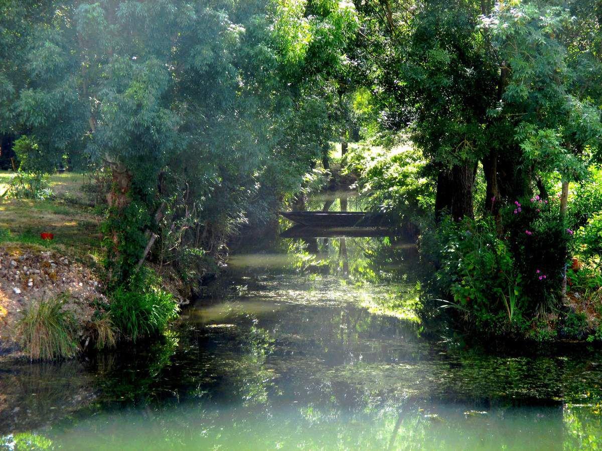 """La Venise Verte, c''est dans le Marais Poitevin et c'est magnifique &#x3B; verdure, rivière ombragée et reposante &#x3B; arpenter les petites venelles pour voir les """"lentilles"""" vertes et les barques est rafraîchissant."""