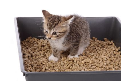 If your cat is not using the litter box you must read about this solution!