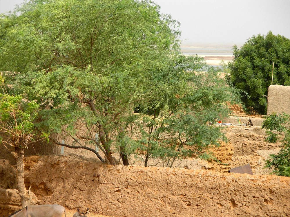 Sur la seconde photo, on distingue le fleuve Niger au fond (Mars 2007)