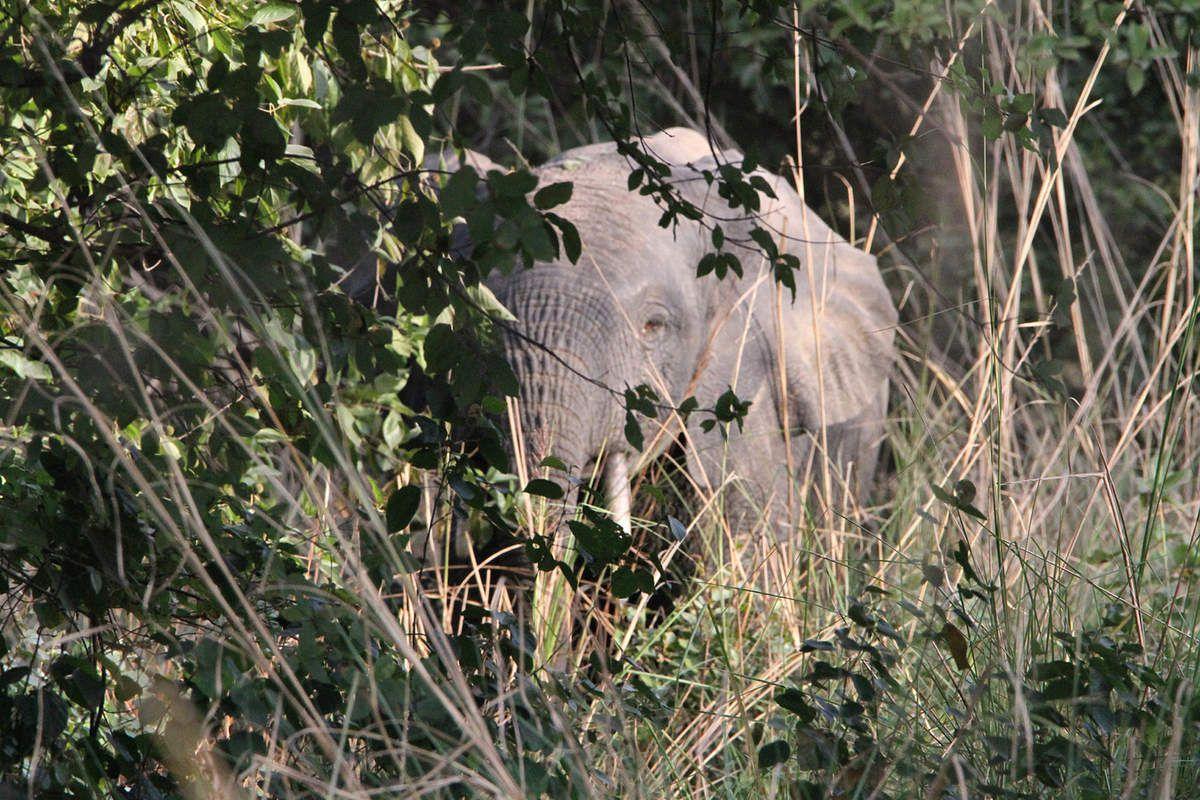 Les éléphants de Boromo