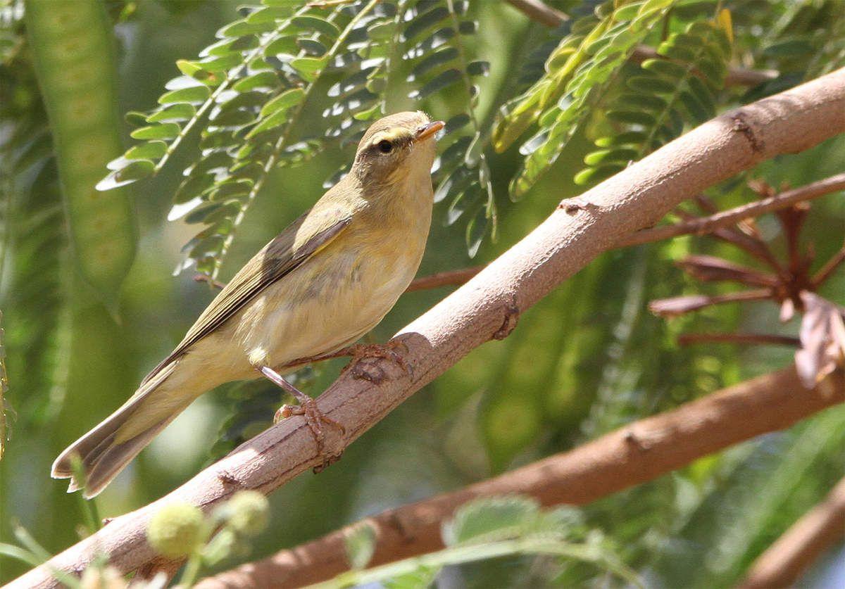Les oiseaux d'Afrique - Partie 2