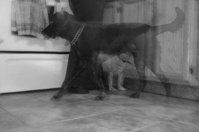 Chien Fantôme - Creepypasta