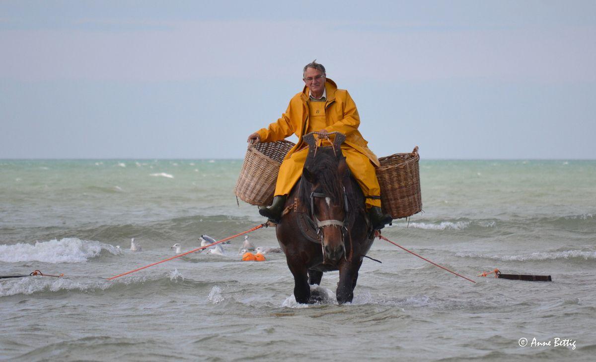 La pêche à la crevette, à cheval