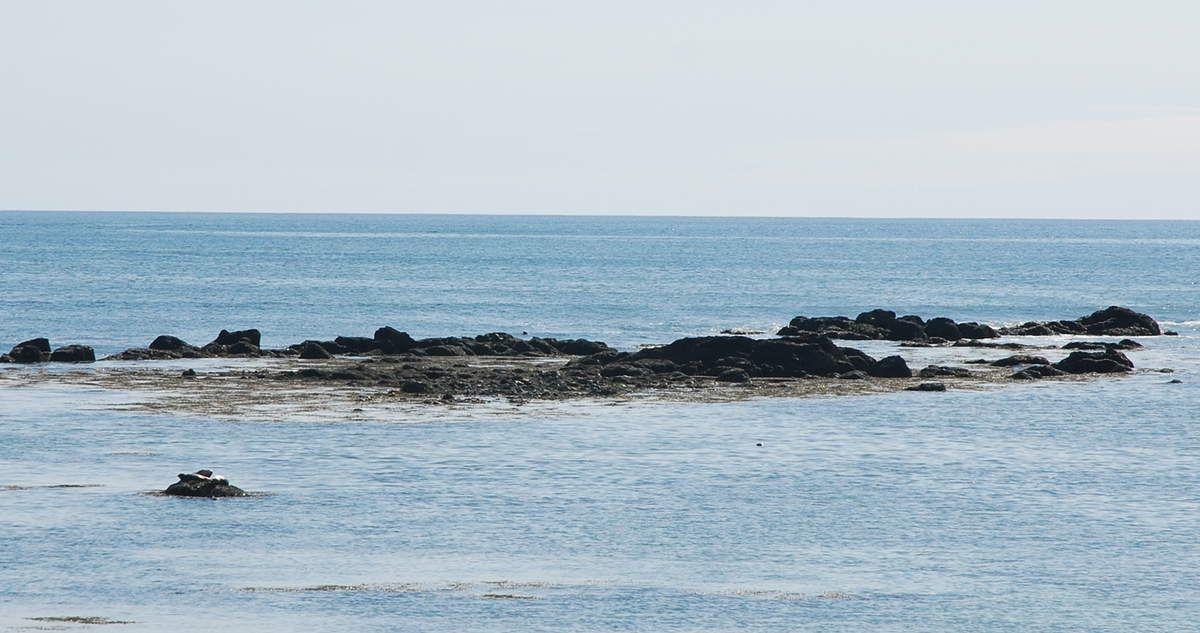 Quelques phoques, les photos de ne sont pas très belles mais on est resté un long moment à les observer....