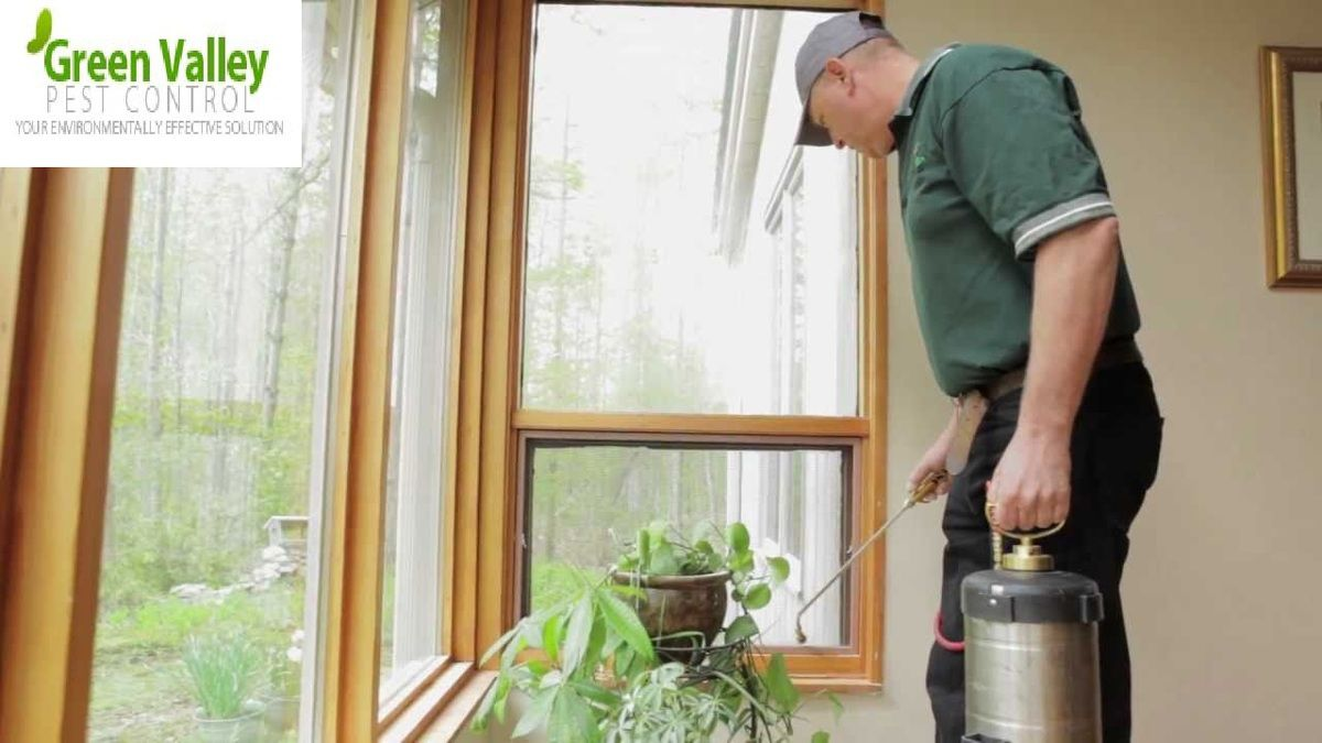 Try This Natural Way To Get Control Over The Carpenter Ants!