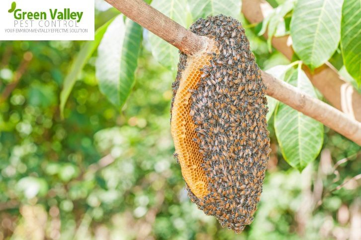 Make Your House Safe from Wasp with Wasp Control Vancouver