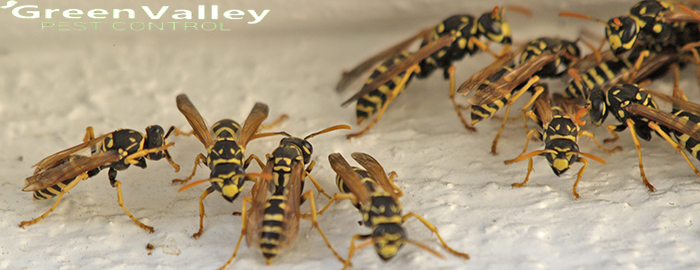 How to find the best wasp control service provider?