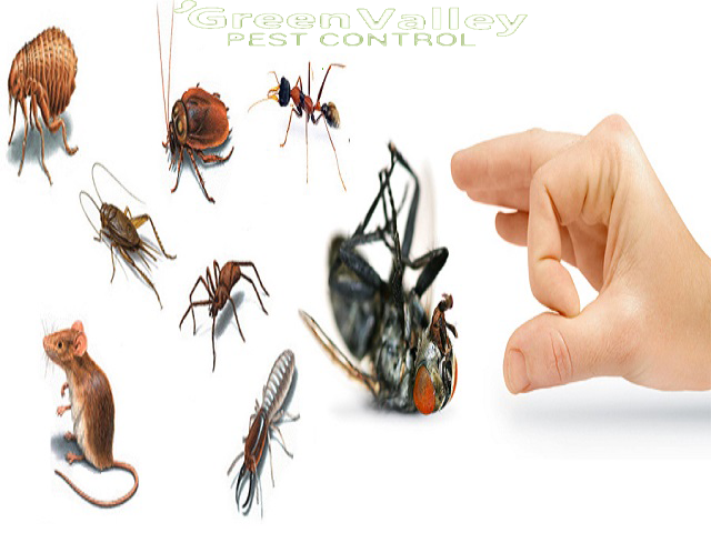 Things to consider before hiring a pest control company