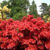 Expédition au jardin des plantes de Toulouse