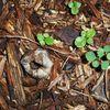En quelques minutes créer un potager de permaculture ?