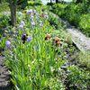 Sonnenschein auf bunte Blüten