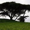 Poème: Graine de chaleur - Anse Etoile