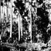Notes du passé: Les anciens pillages de la nature malgache