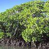 L'état des mangroves est alarmant à Madagascar