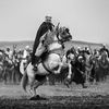 """Naim Charef au """"Salon 2016 du cheval"""" de Tiaret"""
