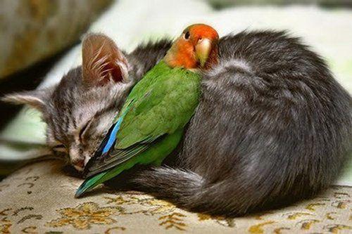 Amitiés animales