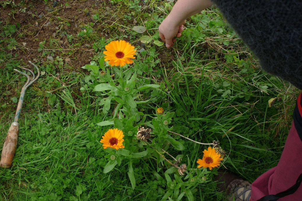 vers de terre , chenilles vertes avec une bande jaune,