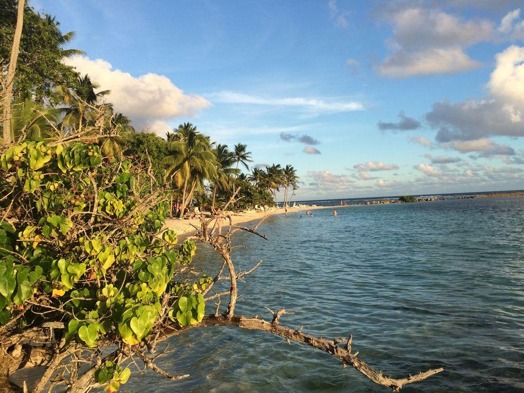 Guadeloupe Grande Terre : Sainte Anne, Saint François, Le Moule, Pointe à Pitre, la Pointe des châteaux, les plages, les maisons