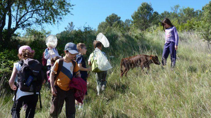 surprises sur la piste des insectes et des plantes à Gajan