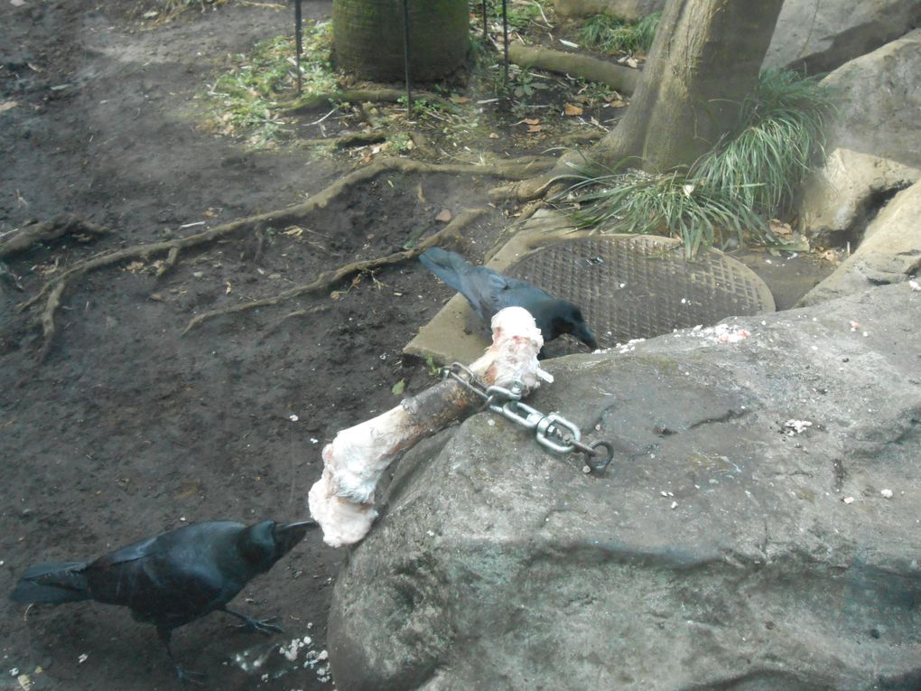 Le zoo de Ueno / Ueno Zoo