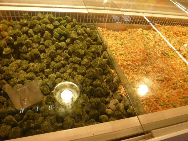 Un peu de tout. Petite course polonaise, légumes congelés en vrac, chleb se sadlem, kurtoszkalacz... Régale...