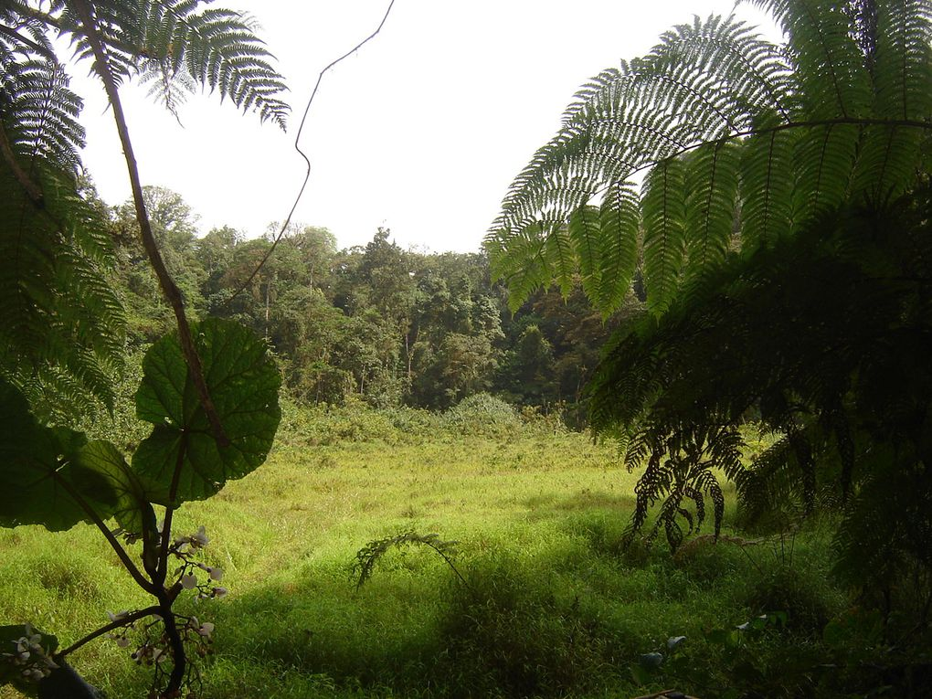 Sao Tomé : Partie III la montagne