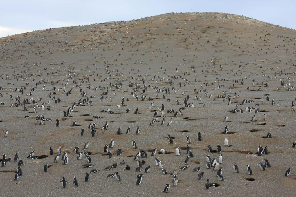 Puerto Natales    Punta Arenas