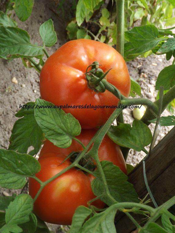 Courgettes capreses  (Mozzarella,Pesto,tomates)  IG bas