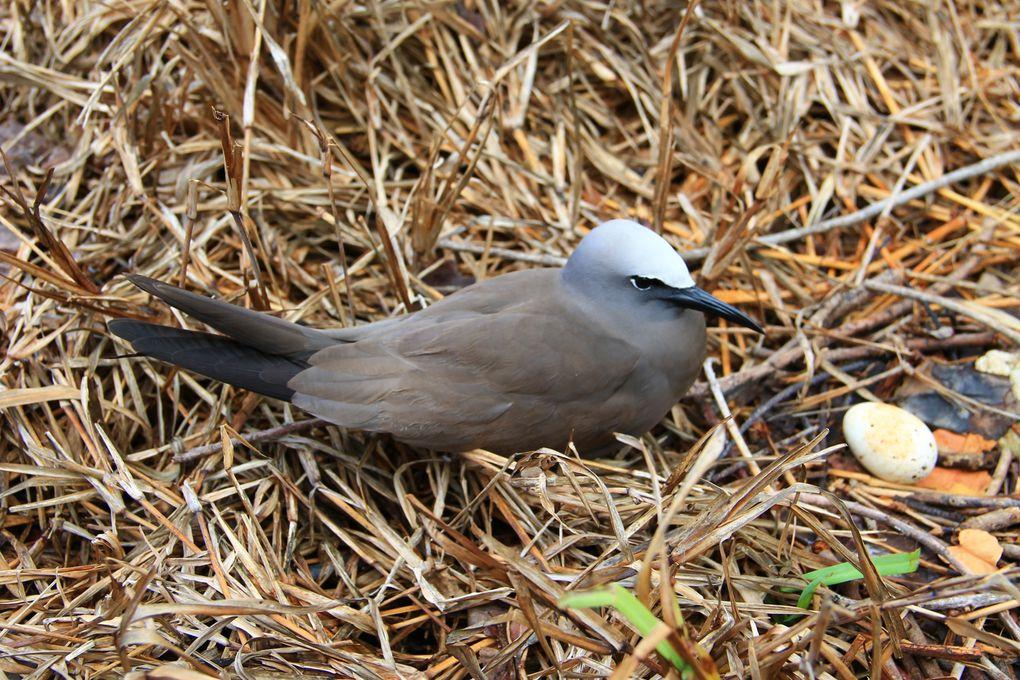 Deux espèces d'oiseaux de l'île