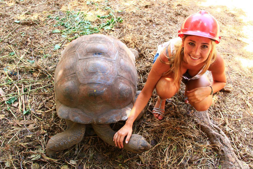 Les tortues de la réserve François Leguat