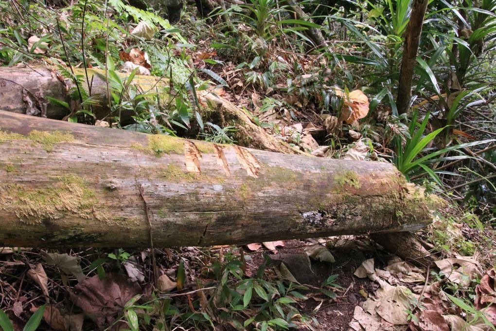 Les marques sur les troncs d'arbres
