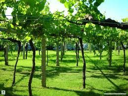 Viticulture en Virginie-Occidentale