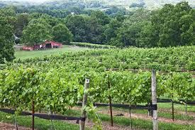 Le vignoble du Tennessee