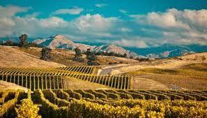 Arkansas Vineyard