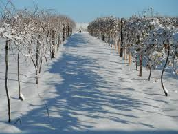 Viticulture in South Dakota