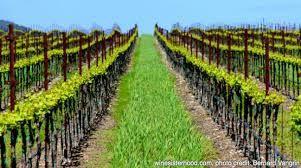 Viticulture dans le Kansas
