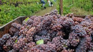 Viticulture in Kansas