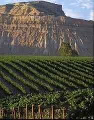 Viticultur in Colorado