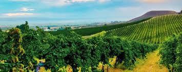 L'Idaho et la Vigne