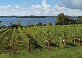Viticulture dans Le Minnesota