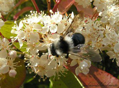 A la rencontre des insectes pollinisateurs