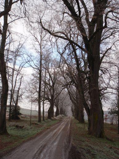 Vers Condat les Montboissier, de nombreux vieux arbres