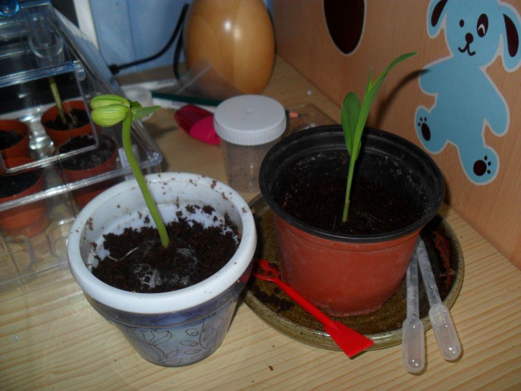 Puis les enfants ont replanté les plantes qui avaient poussé dans des pots plus gros. Ils les ont ensuite replantées dans notre jardin.